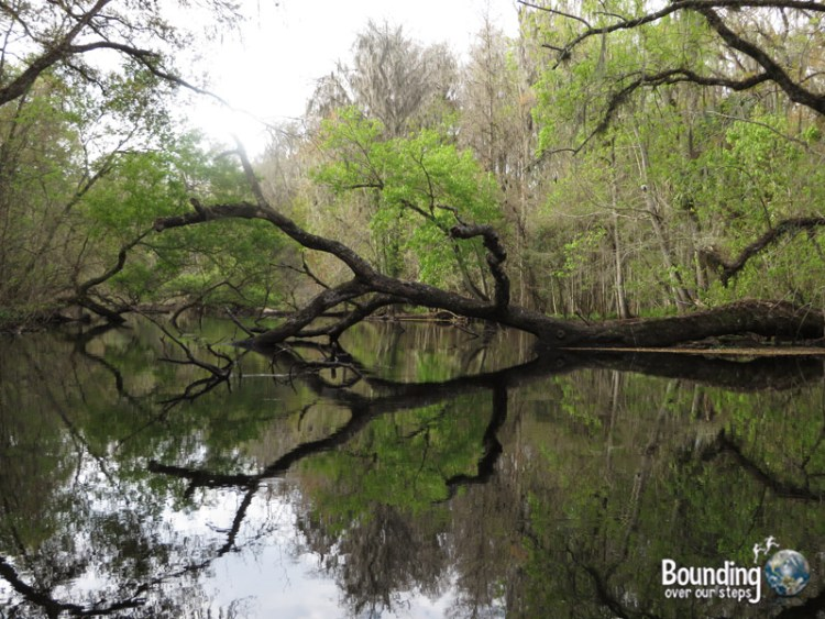 Canoeing Hillsborough River - Reflection