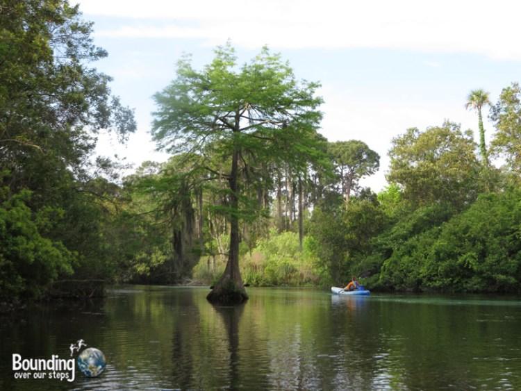 Kayaking Weeki Wachee - Tree