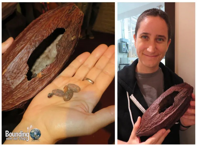 Taza Chocolate Factory Tour - Mindy Cacao Pod