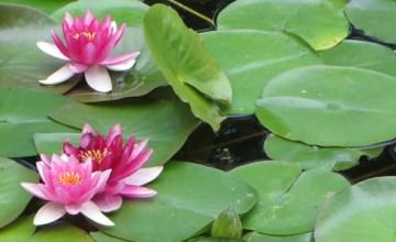 Lan Su Chinese Garden - Featured