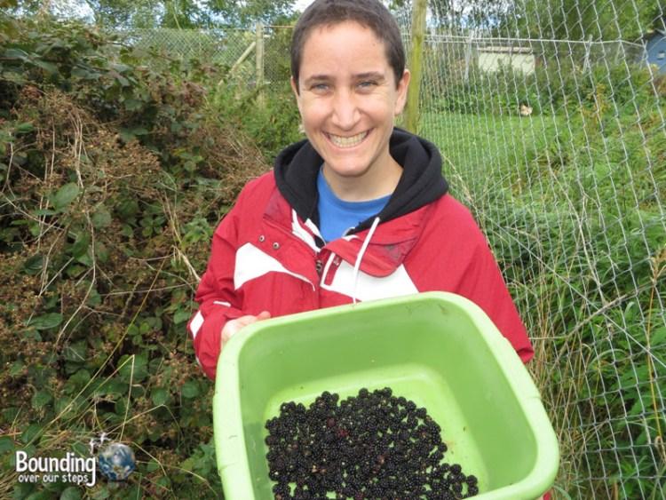 Picking Berries for Megan - Basket
