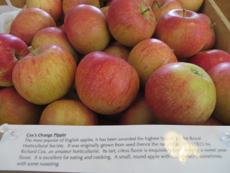 Apple Tasting in Vermont - Cox's Orange Pippin