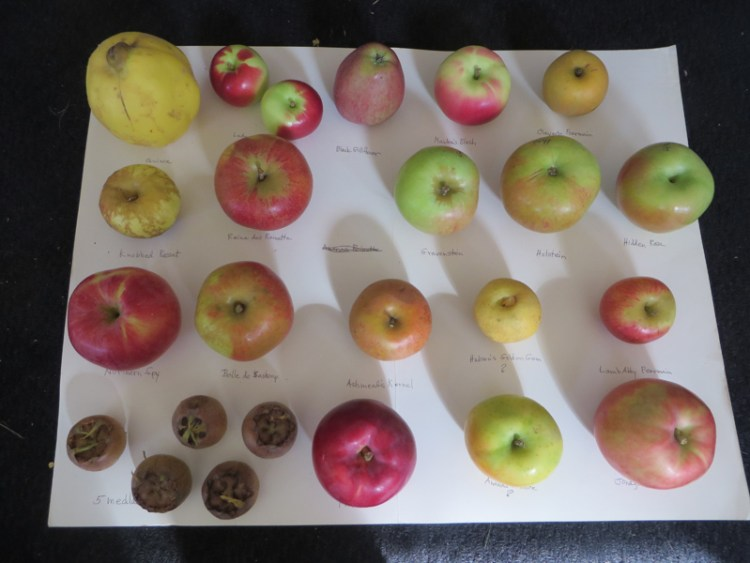 Apple Tasting in Vermont - Heirloom Varieties