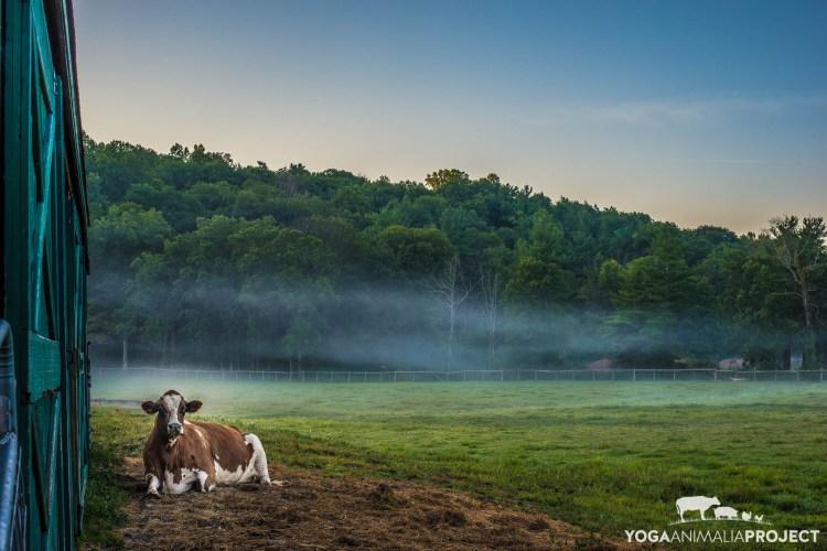 Tucker, Catskill Animal Sanctuary
