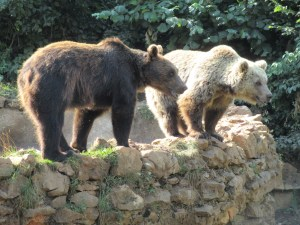 Vegan in Croatia - Kuterovo Bear Rescue - Bears Together