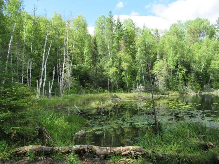 Beautiful green scene in the Boundary Waters Canoe Area (BWCA)