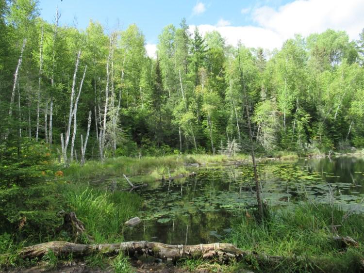 Beautiful green scene in the Boundary Waters Canoe Area (BWCA)