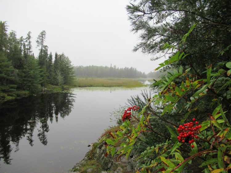 Red berries along a portage trail in the Boundary Waters Canoe Area (BWCA)