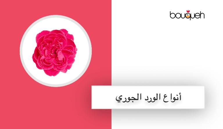 اجمل انواع واسماء الورد الجوري rosa damascena