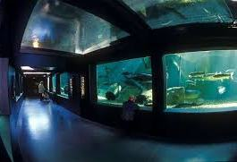 Aquarium de Touraine (à 65 kms)