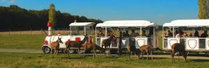 safari train
