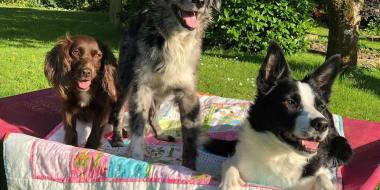 multi dog