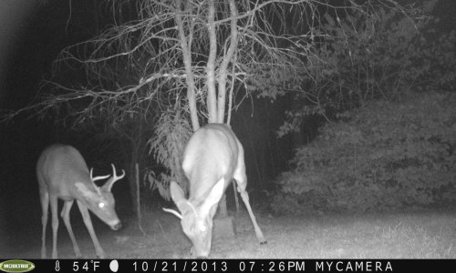 6 Point and Spike 10-21-2013
