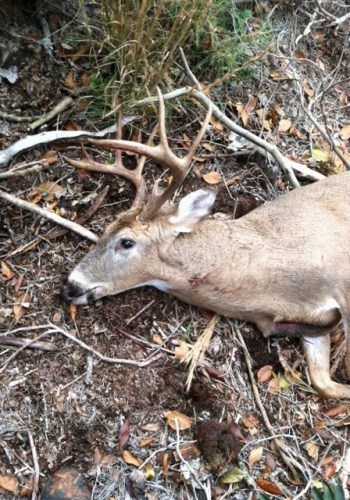 9 Point Picture 1