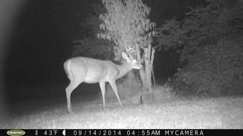 Small 8 Point Buck 9/14/2014
