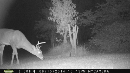 Small buck 9/15/2014