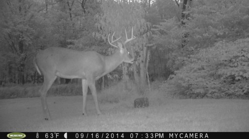 Wide 8 Point 9/16/2014