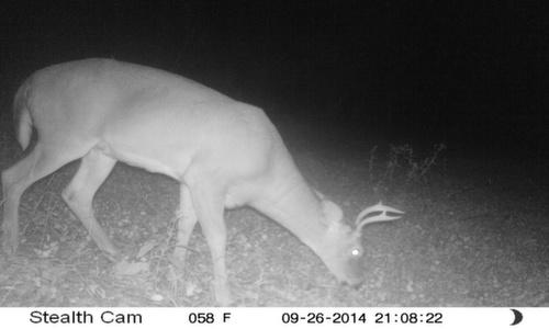 Small Buck 9/26/2014