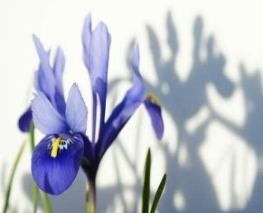 Easy Bulbs For Spring Colour