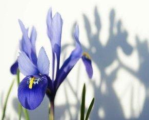 Easy Bulbs For Spring Colour