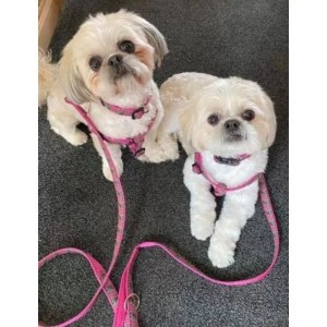 Cerise Flowers Collars Leads and Harnesses