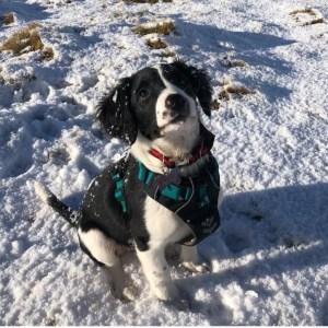 Sötnos All-rounder Dog Harness