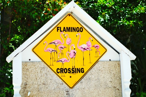 key west flamingo _effected