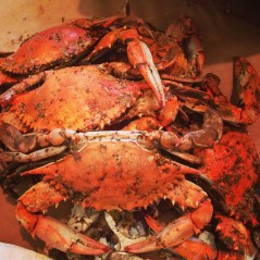 Learn about the differences between the four most popular crabs.