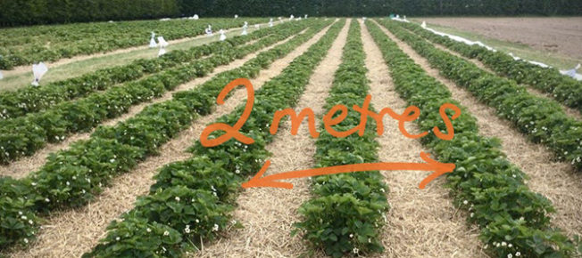 Pick your own at 2m distance