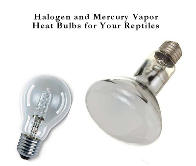 Halogen And Mercury Vapor Reptile Heat Bulbs Box Turtle World