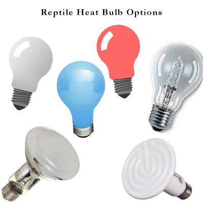 Learn about the various reptile heat bulbs available for your box turtle.