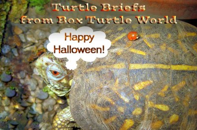 Happy Halloween from Turtle News Briefs