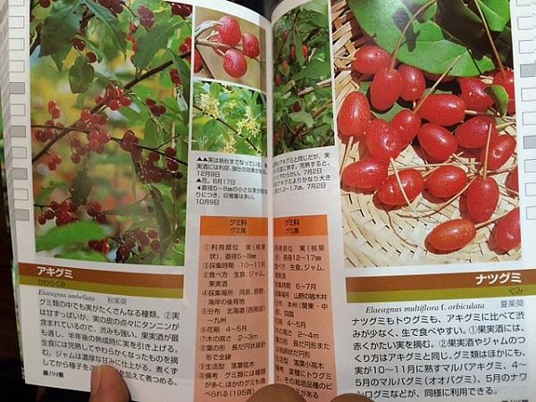 果実のページ