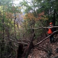 師匠と歩く猟場―忍び猟(おもに鹿)のコツを聞いてきた。