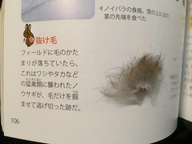 ウサギの抜け毛