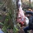 山奥で鹿の解体作業