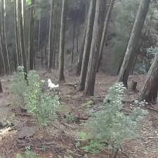 狩りバカ日誌動画つき 2016年1月31日(散弾銃・シカ巻き狩り)