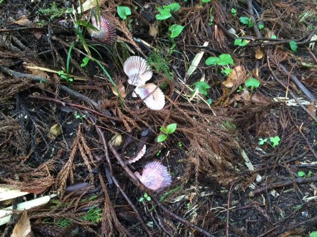 山で見つけたヘンな物1