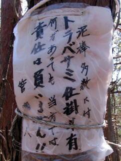 マツタケ山