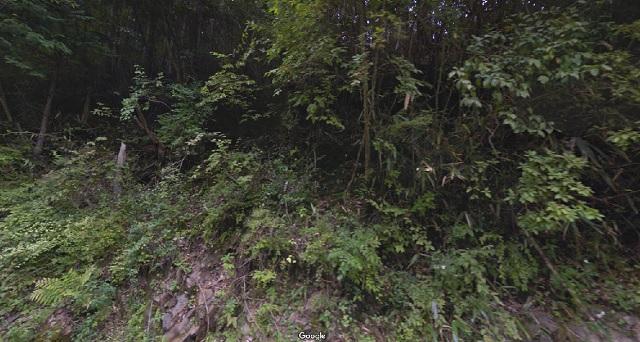 効率なら最強の流し猟。狙うべき林道・見るべき地形はここだ!