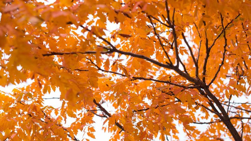 why fall is the best time to receive laser eye surgery