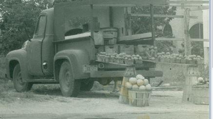 Roadside citrus stand