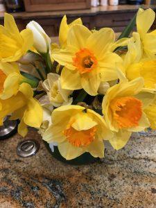 Bozeman-Daffodils