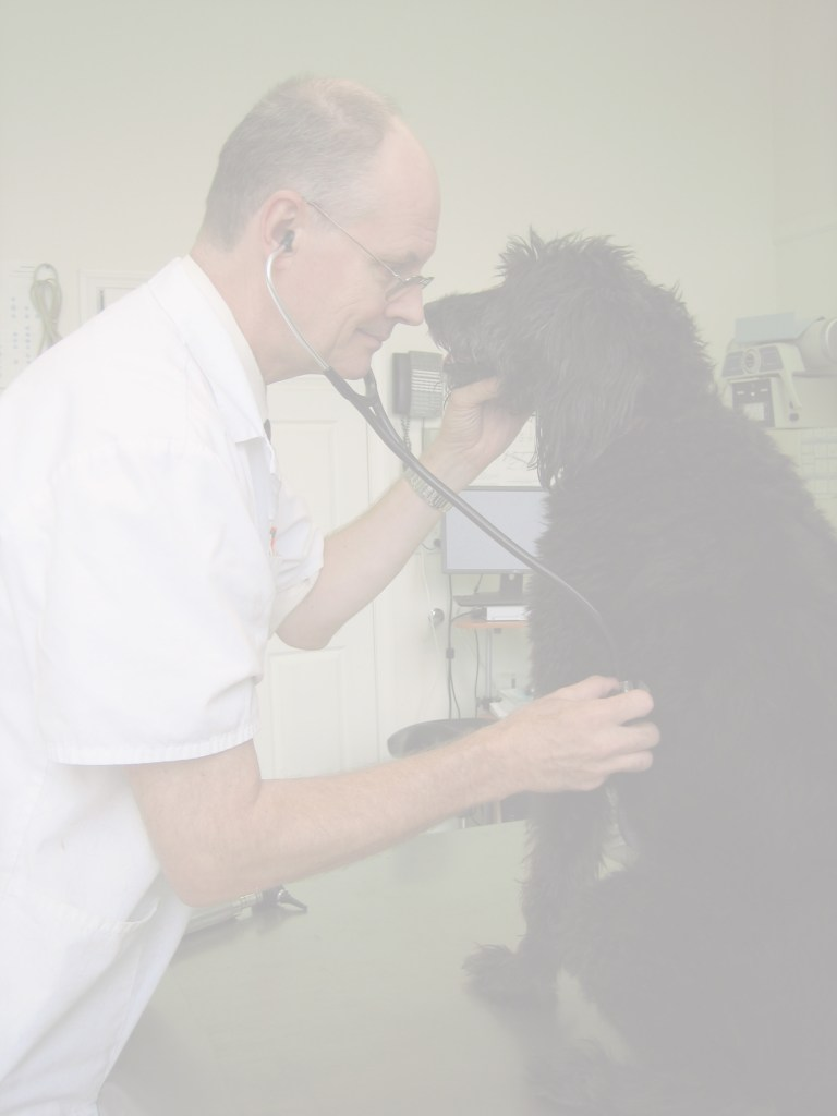 A view of veterinarian Dr. Peter Lugten examining a dog in the treatment room of Basic Pet Care.