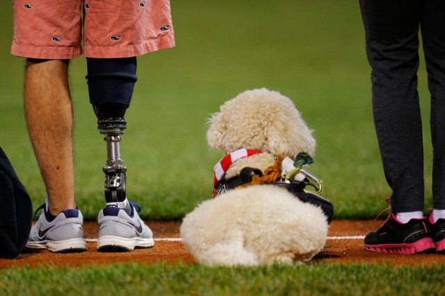United States Marine Dominic Devila (L) and Courage, a service dog trained to assist wounded soldiers, stand on the third base line during a pre-game ceremony honoring the Wounded Warriors program before the the MLB American League baseball game between the Toronto Blue Jays and the Boston Red Sox at Fenway Park in Boston, Massachusetts September 20, 2013.