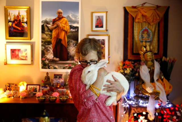 Wendy Cook poses for a portrait with Kunsang aka Papa Bear, a rabbit she bought as a religious act of mercy at her home in Lincoln, MA, September 14, 2016.