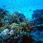 PlongéeBleue Sud : club de plongée à Banyuls sur mer