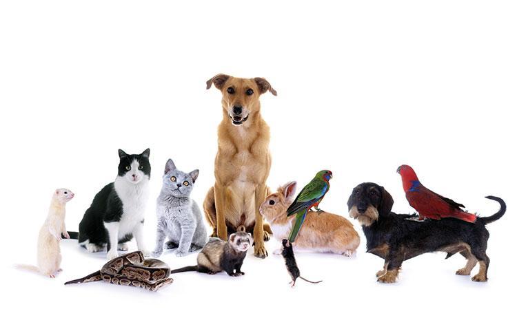 annuaire animalerie en ligne