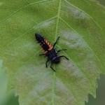 Insectes de France : macro-photographie