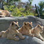 Zoo de Vincennes : découvrez enfin ses secrets